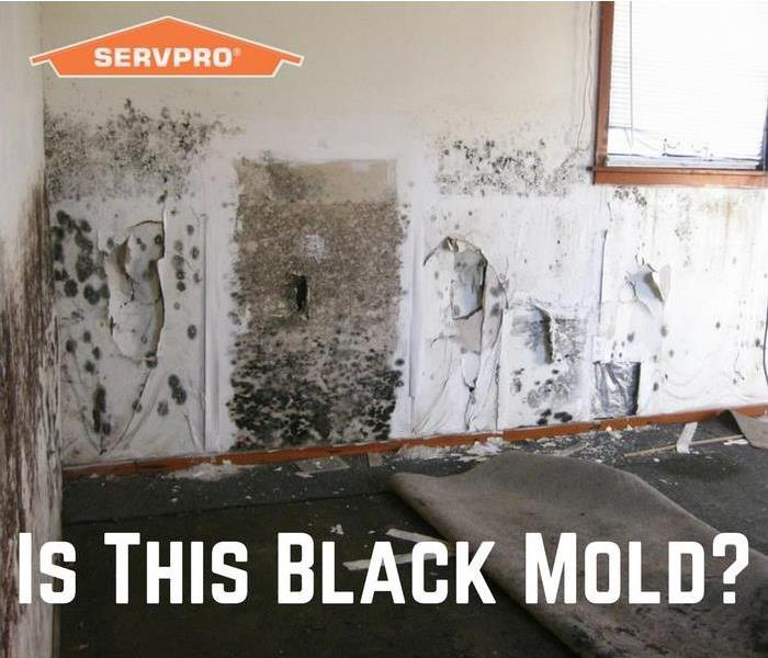 Mold Remediation Is This Black Mold Georgetown County