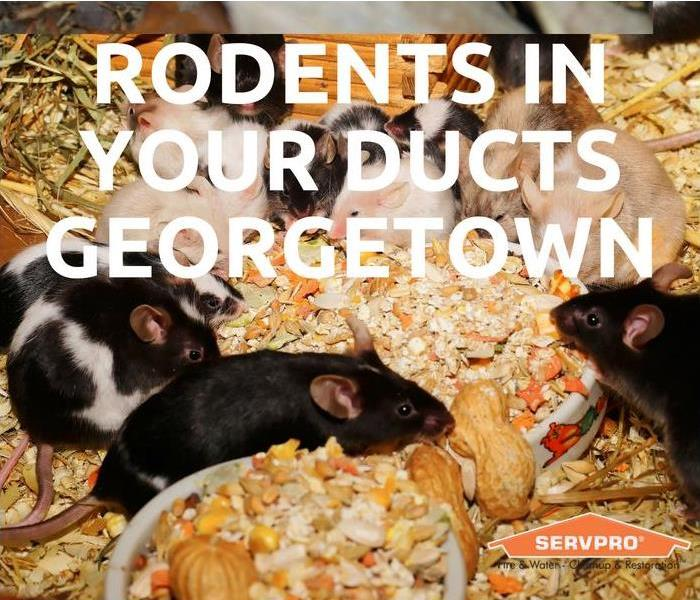 Cleaning Rodents In Your Ducts Georgetown Co