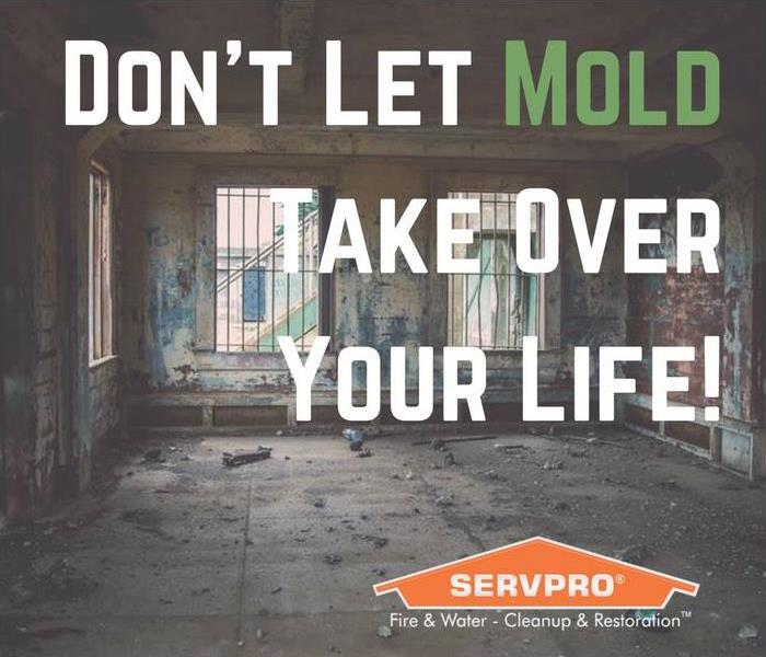 Mold Remediation Don't Mess With Mold In Georgetown